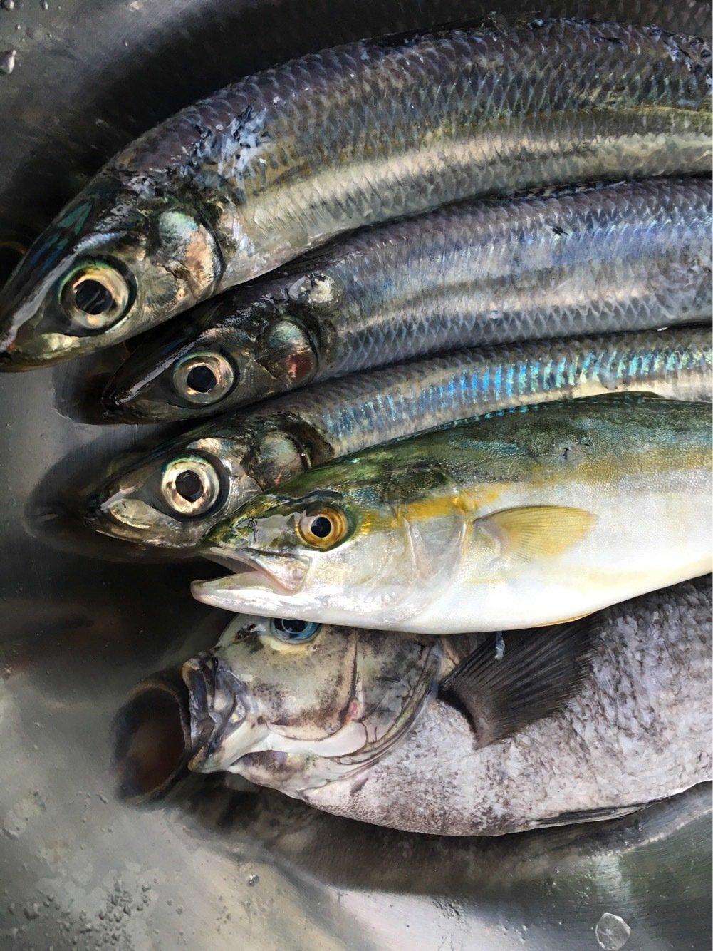 nomanslandさんの投稿画像,写っている魚はウルメイワシ