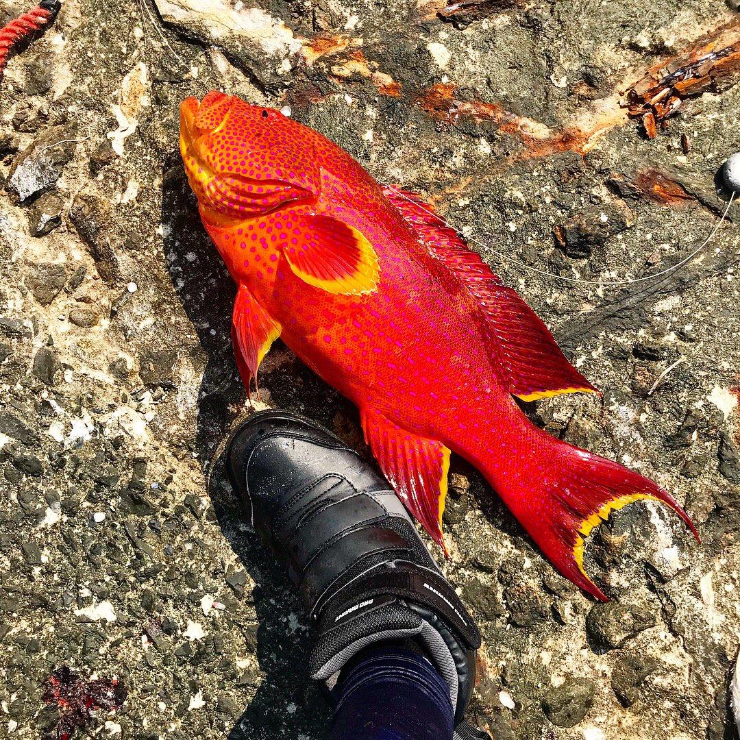 竜馬a.k.aGAPPYさんの投稿画像,写っている魚はバラハタ