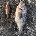 釣りバカしゅんさんの青森県弘前市での釣果写真