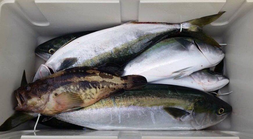 釣りキチのいちさんの投稿画像,写っている魚はブリ