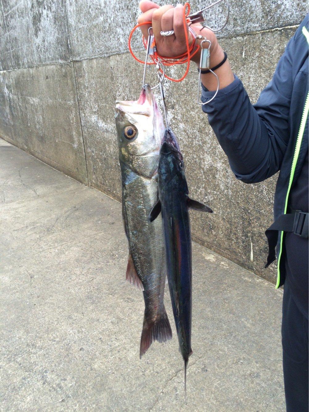 tetsuさんの投稿画像,写っている魚は