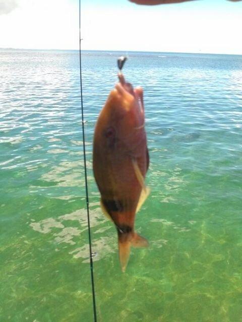 にたやさんの投稿画像,写っている魚はオジサン