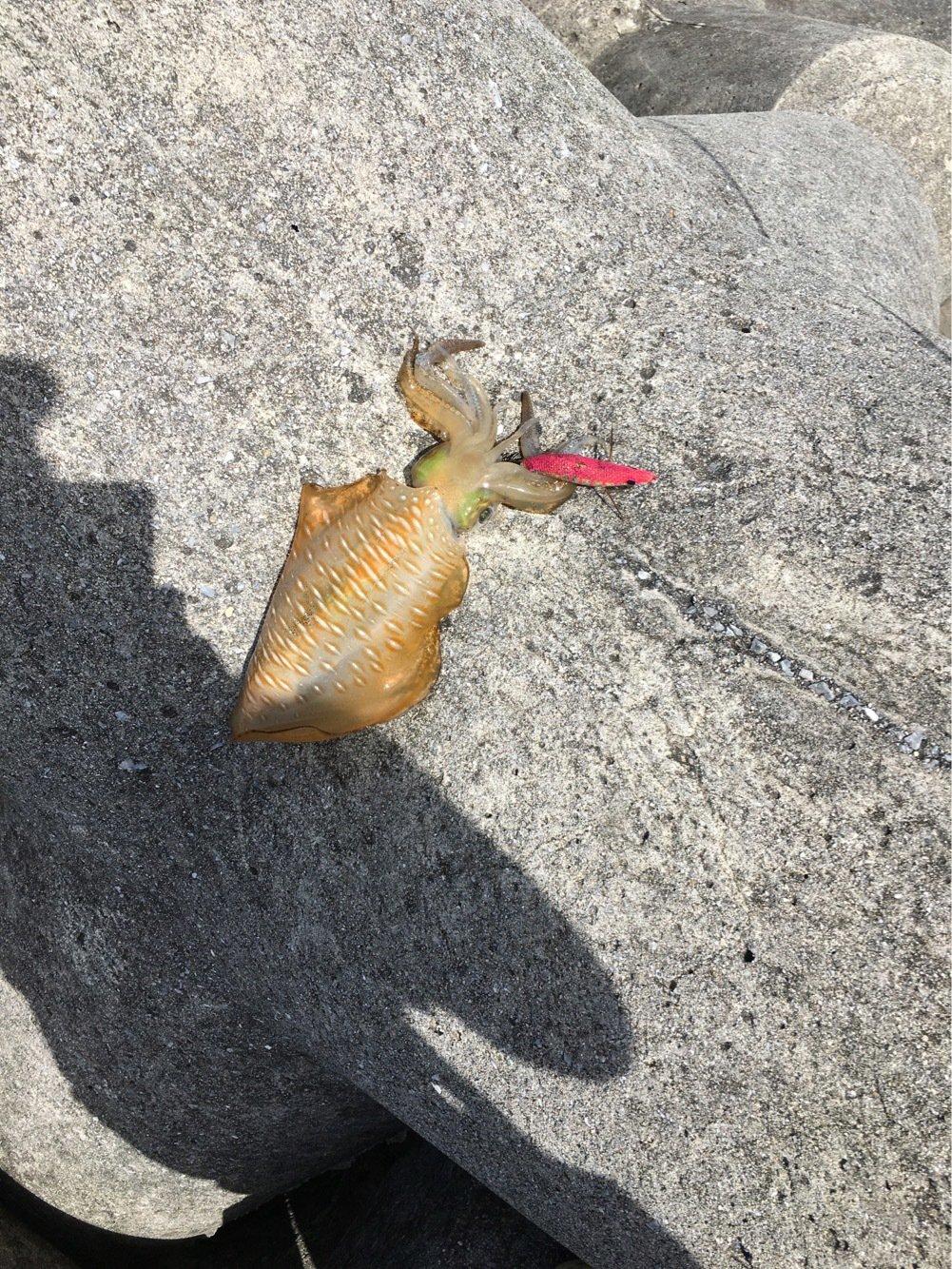 たけしゃんさんの投稿画像,写っている魚は