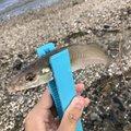 Yuuuuuuukiさんの福岡県糸島市でのシロギスの釣果写真