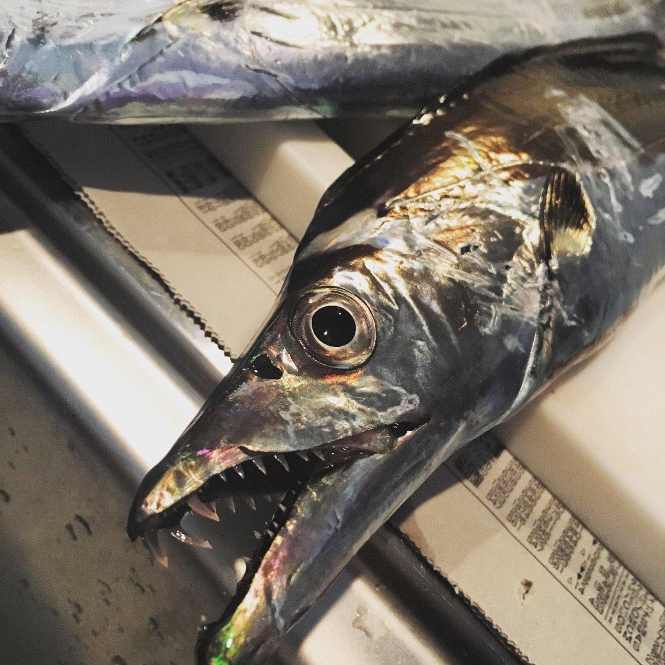 おるさんの投稿画像,写っている魚はタチウオ