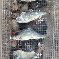 akiさんの静岡県富士宮市での釣果写真
