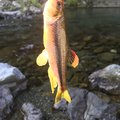 kappatoshiさんの奈良県宇陀市での釣果写真