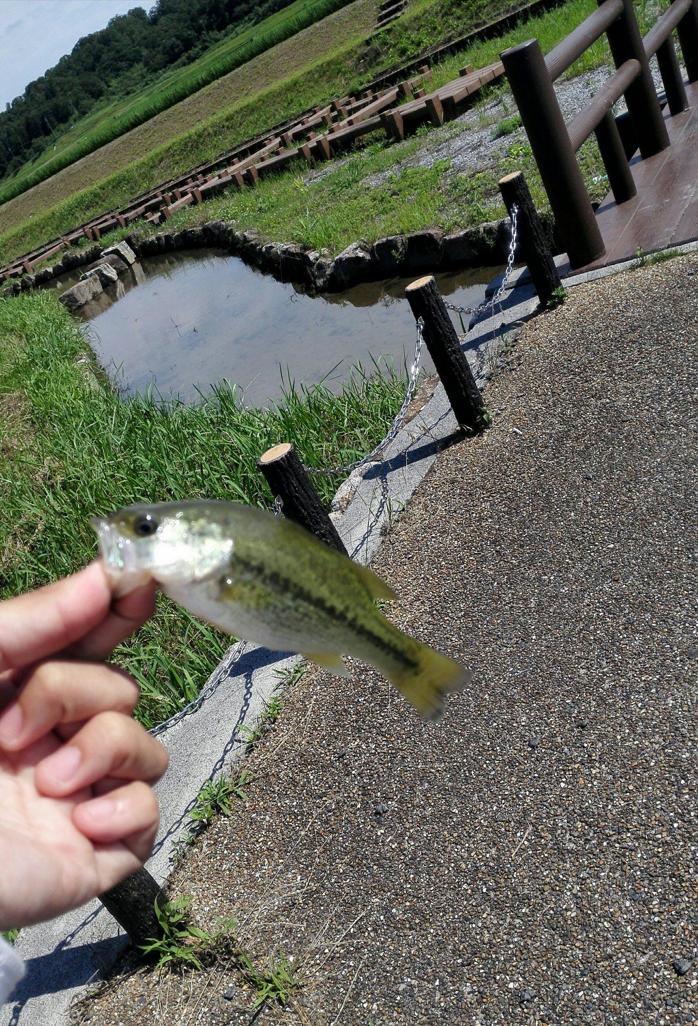 ヨーネル・ニャンダースさんの投稿画像,写っている魚はブラックバス