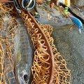 のぶさんの新潟県三条市での釣果写真