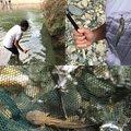 しんのすけさんの岐阜県下呂市での釣果写真
