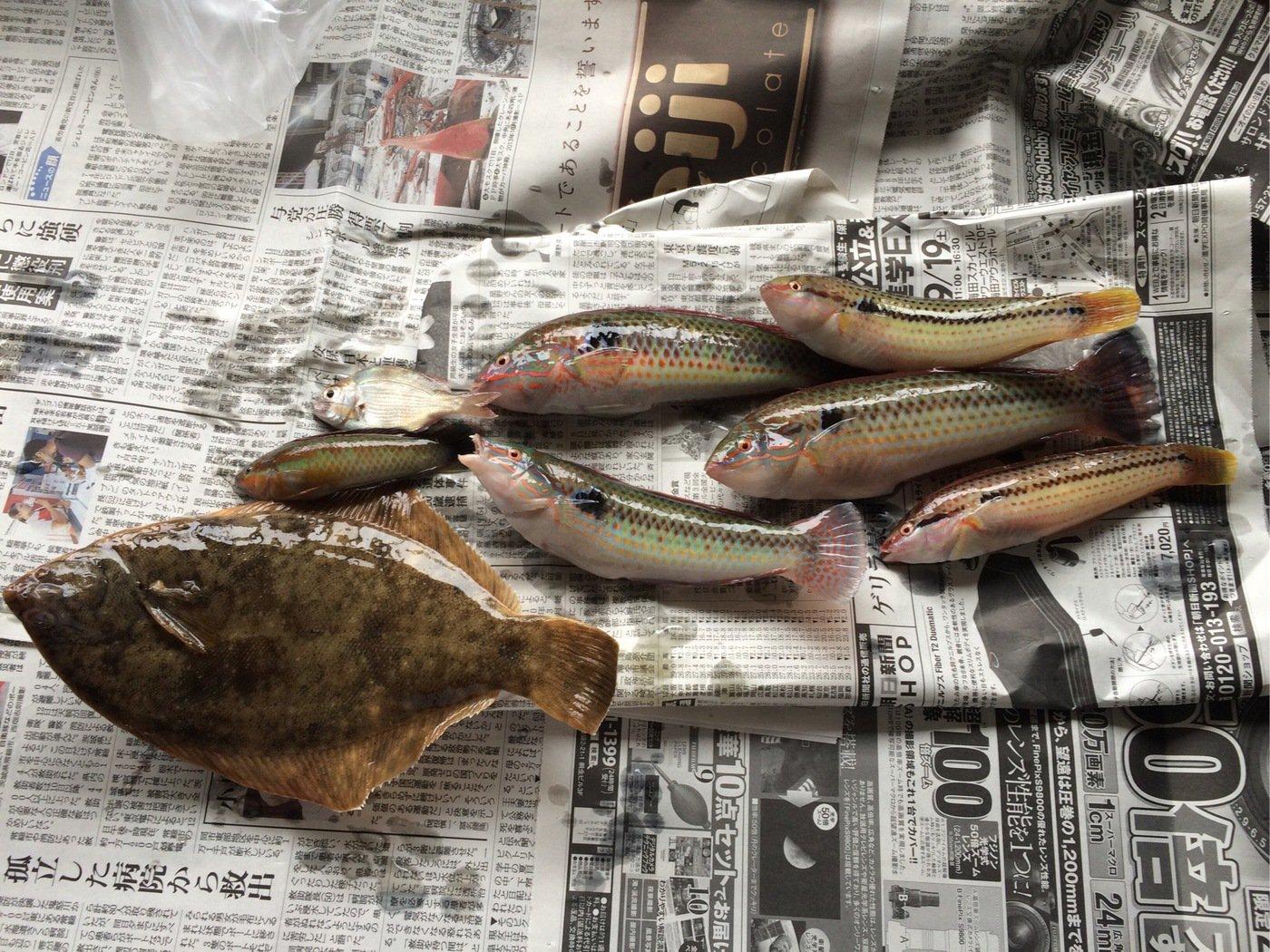 ふぶきさんの投稿画像,写っている魚は