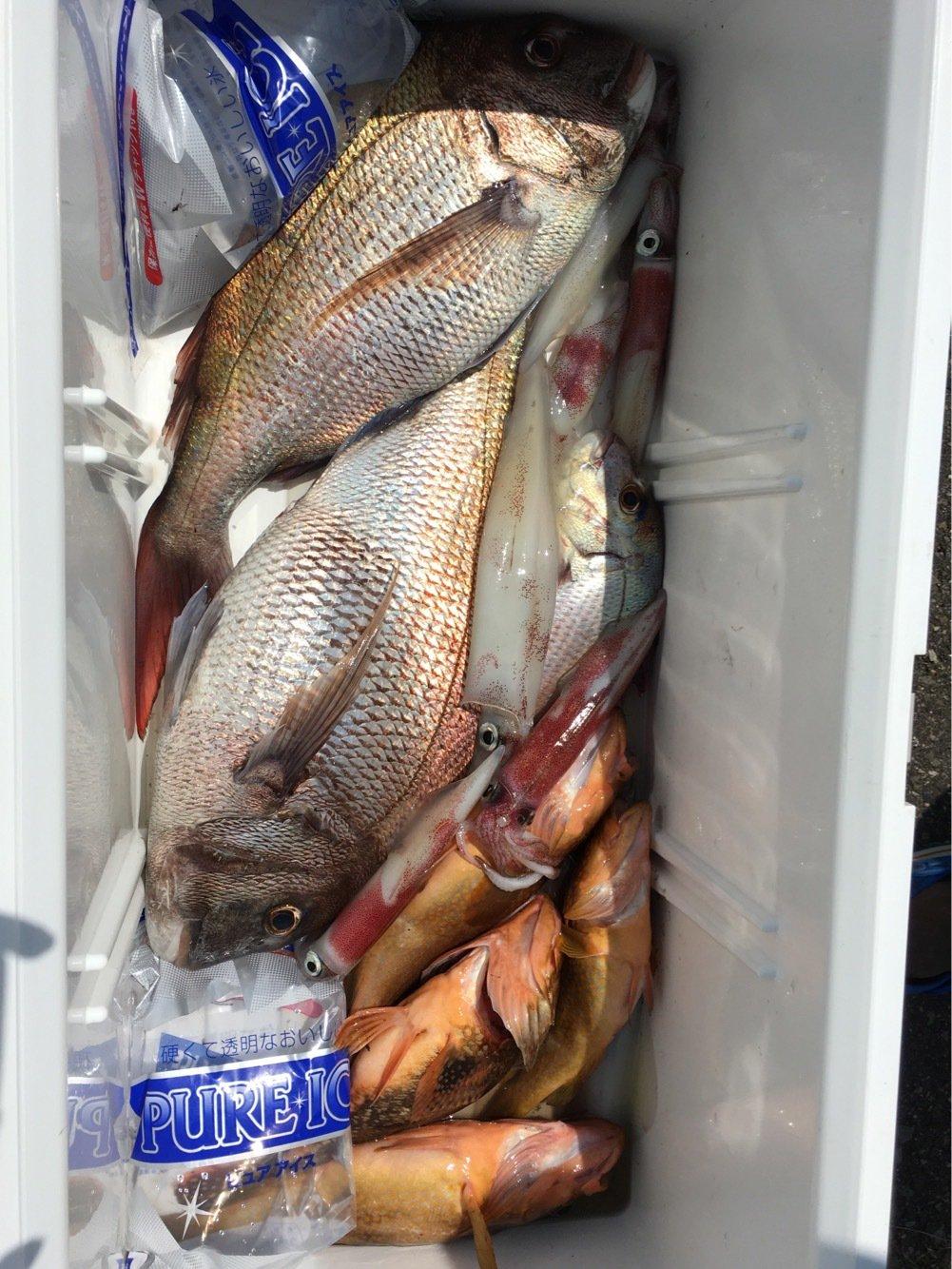 ぬこ好きさんの投稿画像,写っている魚はケンサキイカ