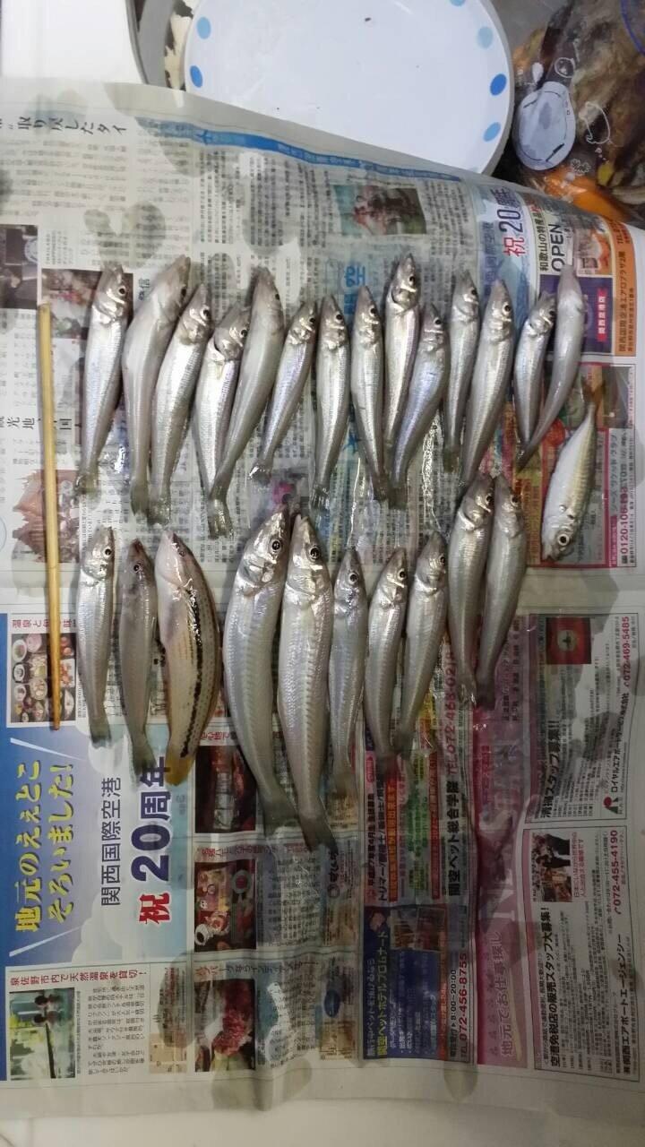 にたやさんの投稿画像,写っている魚はシロギス