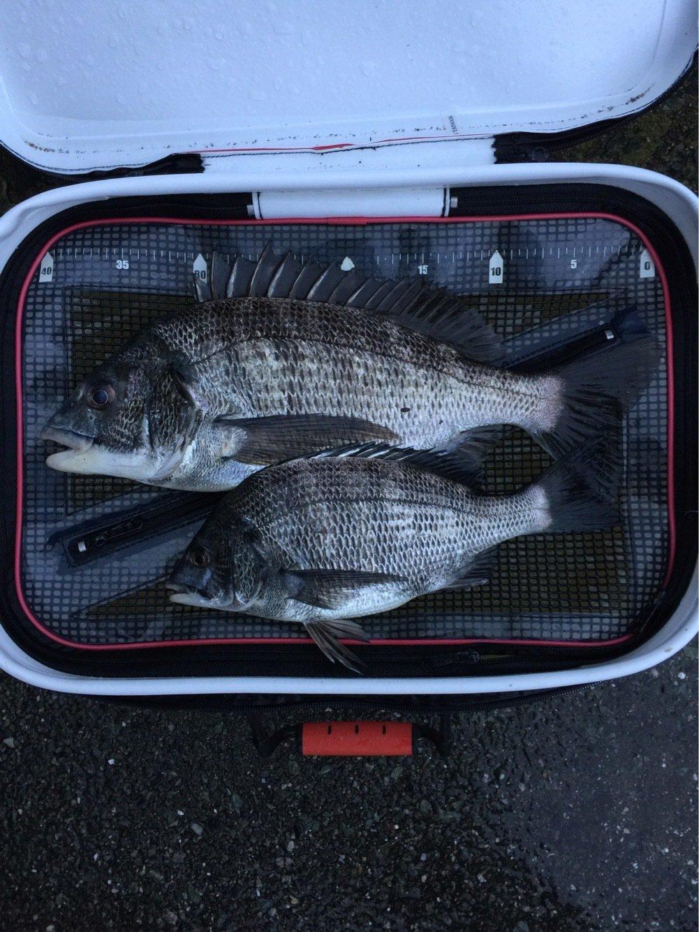 ひでおさんの投稿画像,写っている魚はクロダイ
