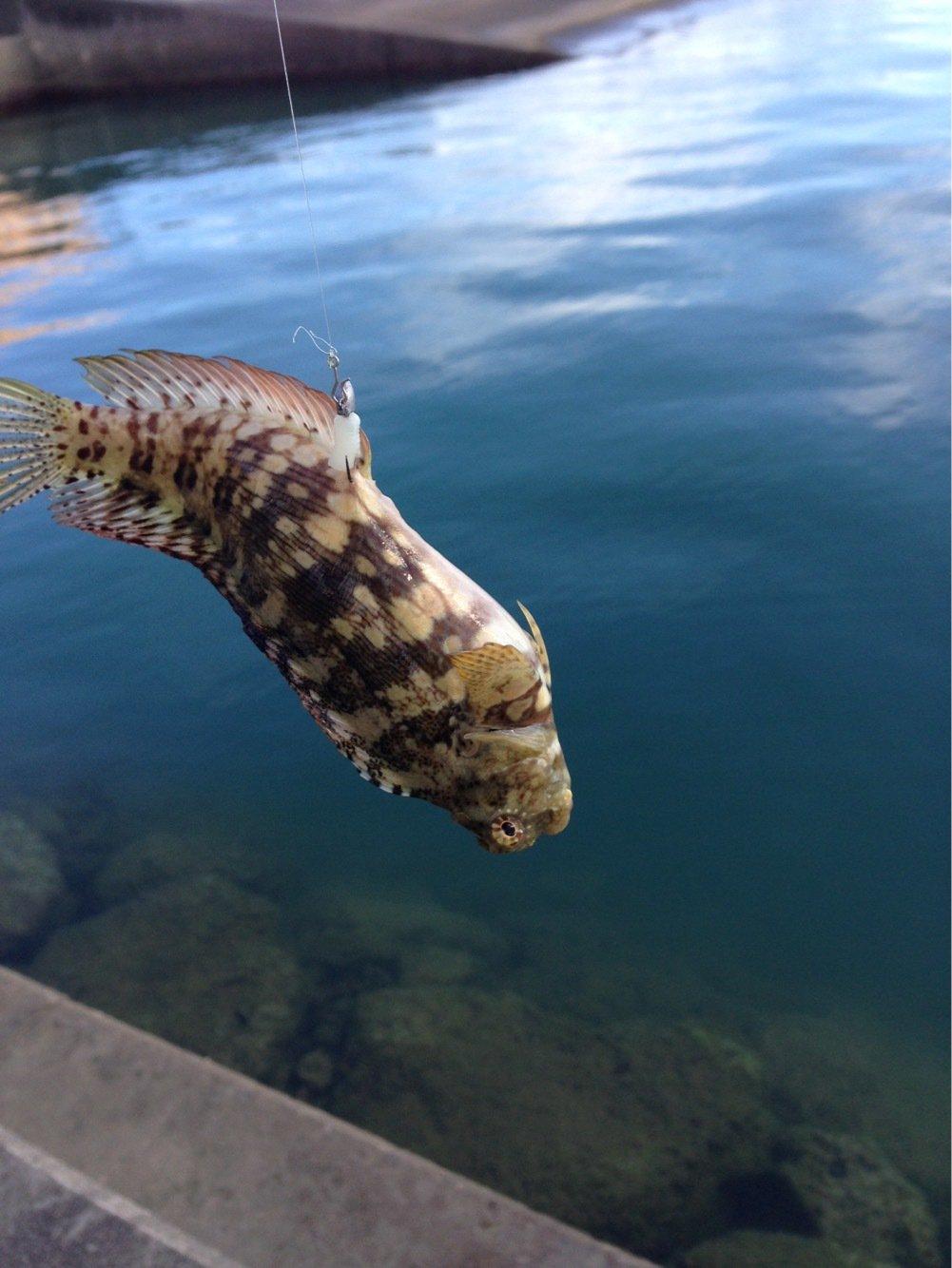 にたやさんの投稿画像,写っている魚は