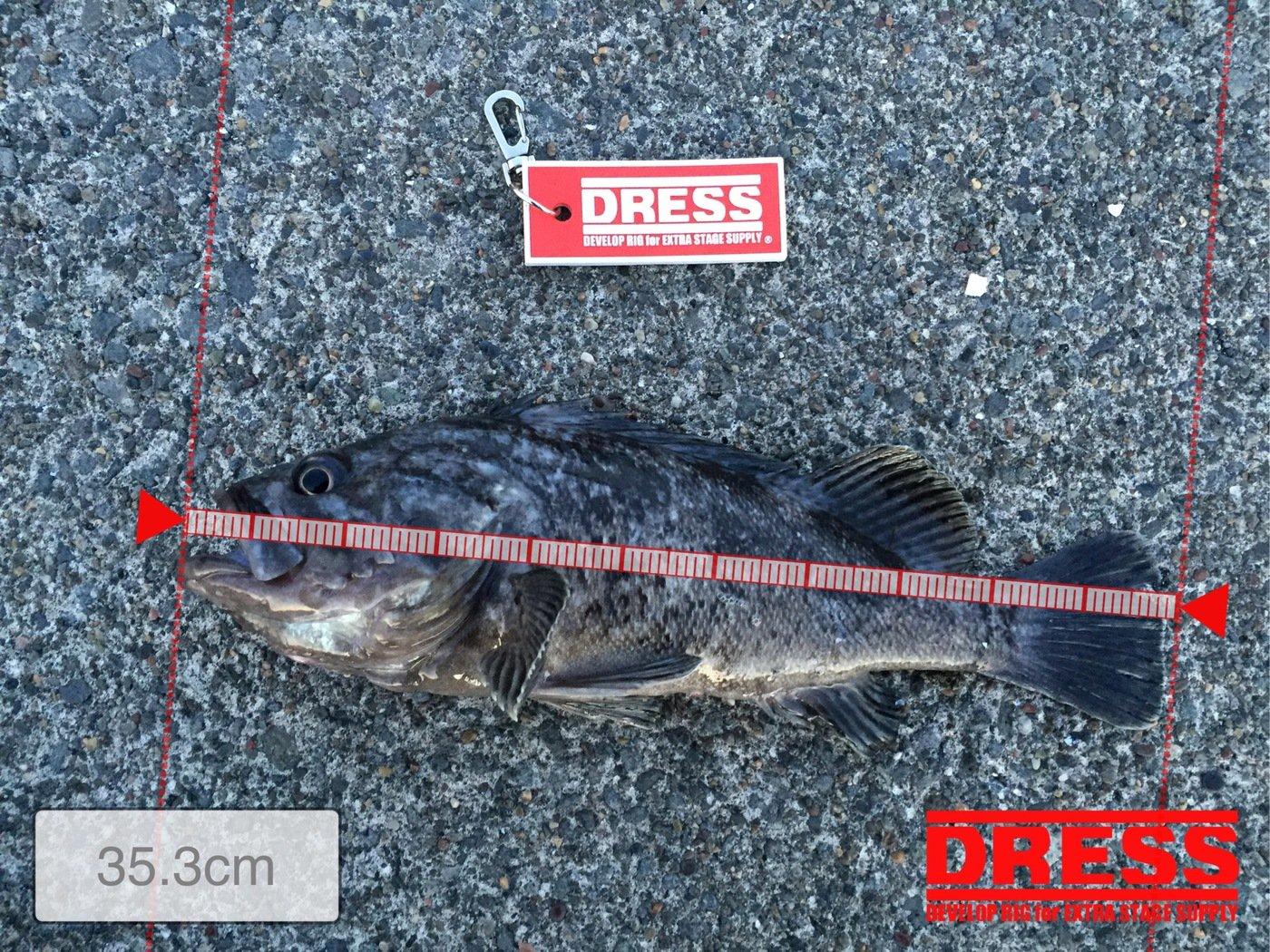 しーちゃんさんの投稿画像,写っている魚はソイ