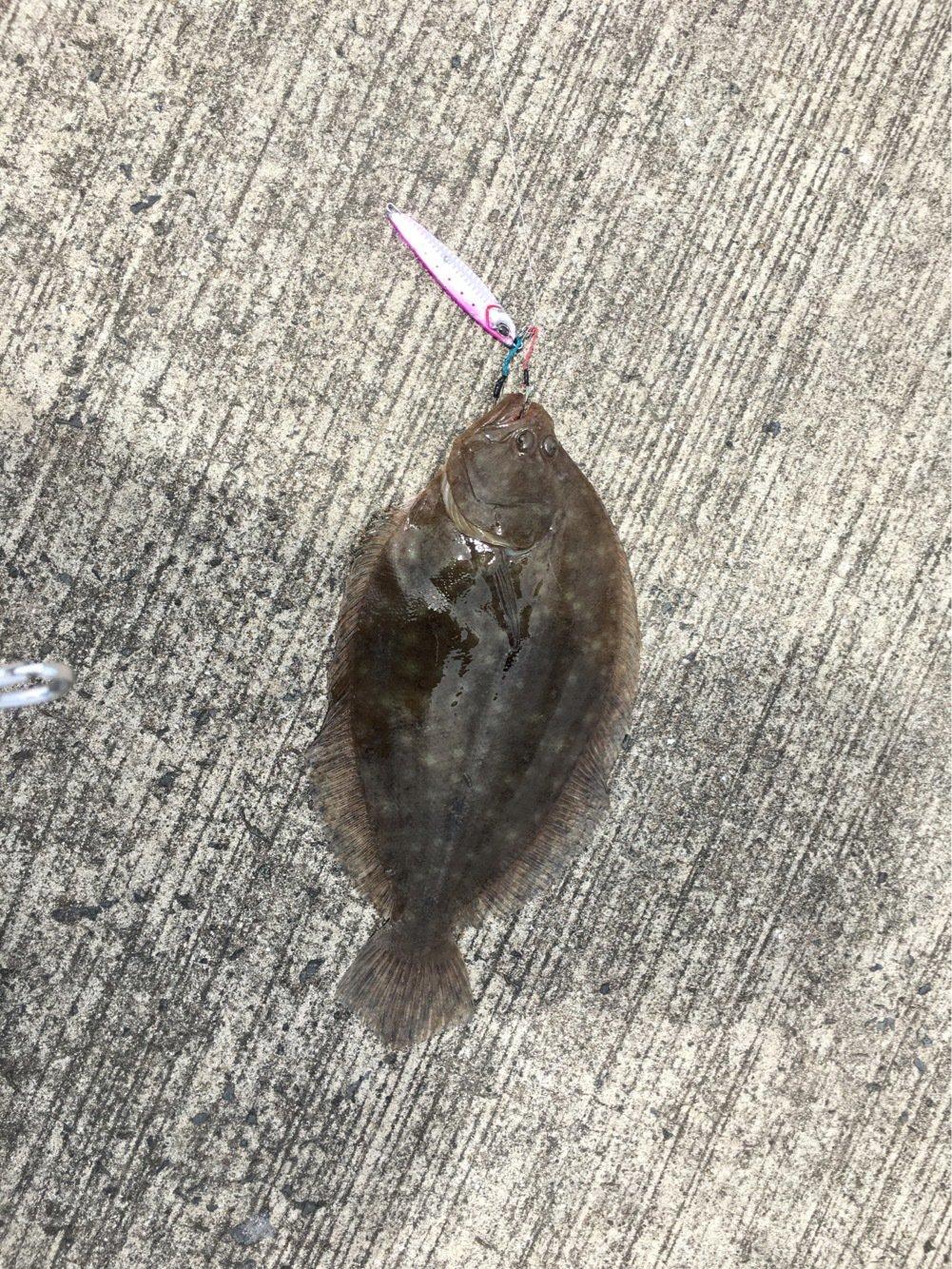 小恋さんの投稿画像,写っている魚はヒラメ