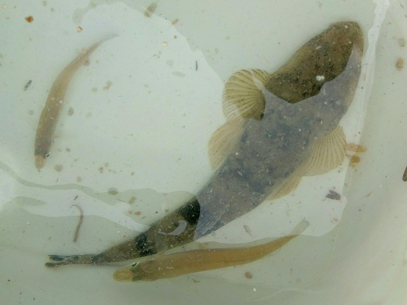 あだちさきさんの投稿画像,写っている魚は
