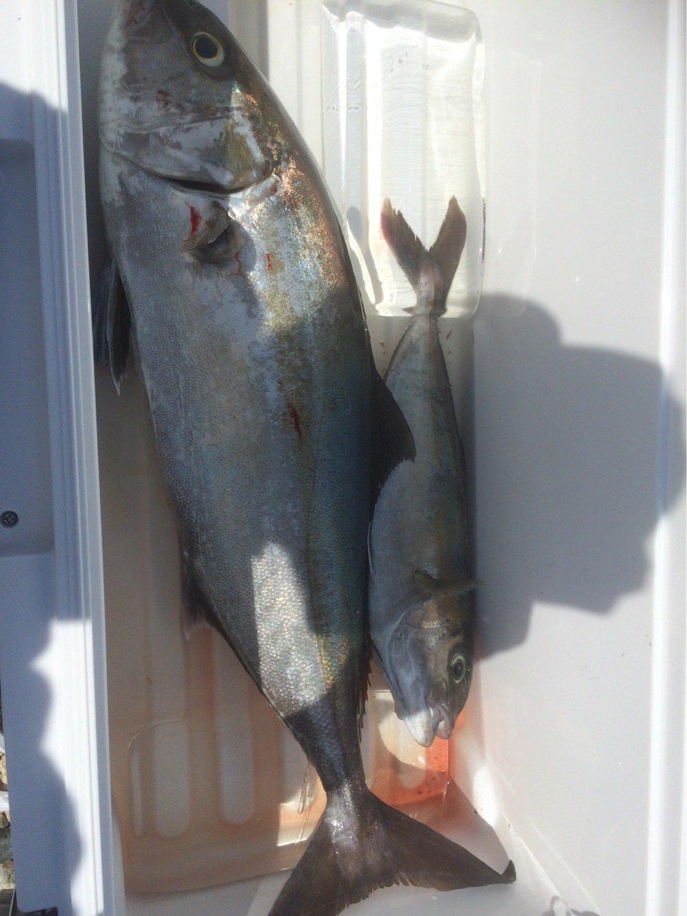 ひろしぺんさんの投稿画像,写っている魚はカンパチ