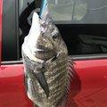 やまらっぴさんの鹿児島県出水市での釣果写真