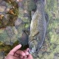 のぶさんの福島県須賀川市での釣果写真