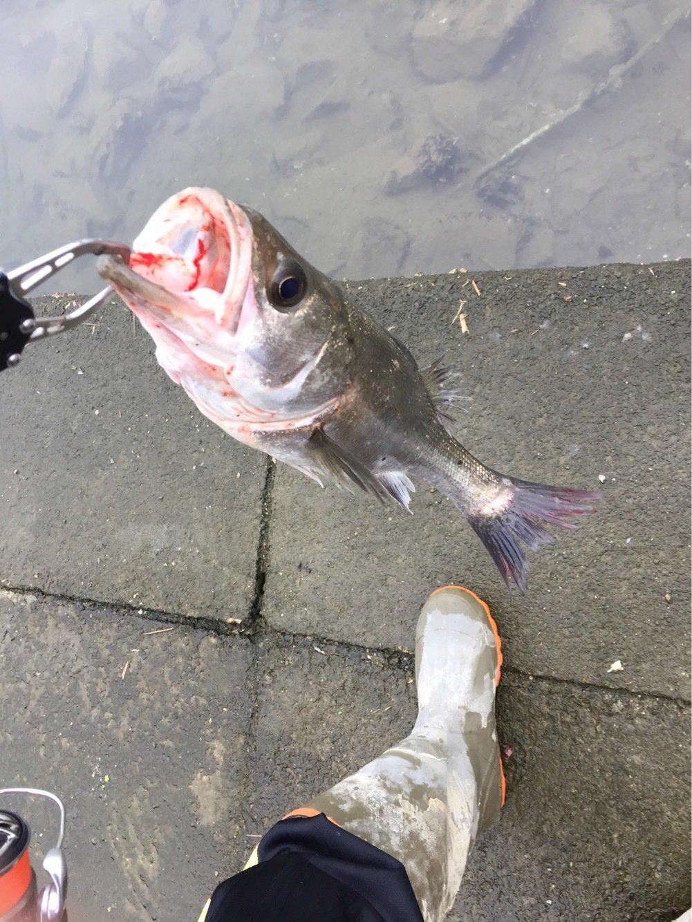 あつしさんの投稿画像,写っている魚は