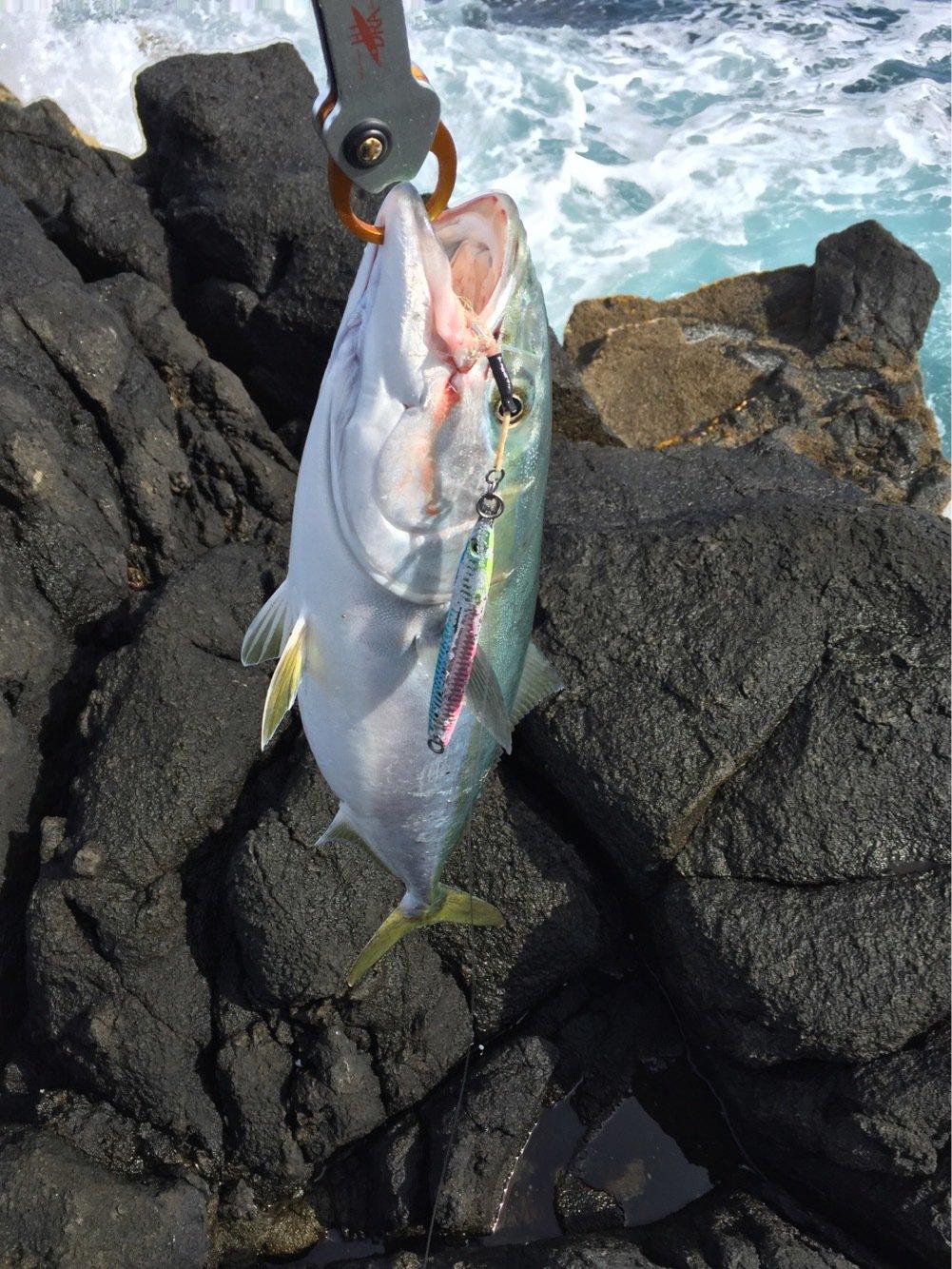 hikkaさんの投稿画像,写っている魚は