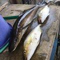 Bon-Dさんの鹿児島県肝属郡での釣果写真