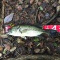 あかさんの三重県亀山市での釣果写真