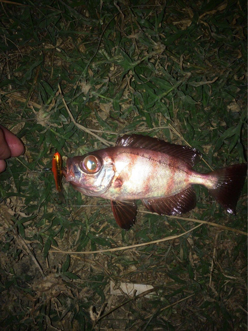 TeruKohさんの投稿画像,写っている魚は