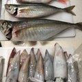 ティケオさんの福井県丹生郡でのアジの釣果写真