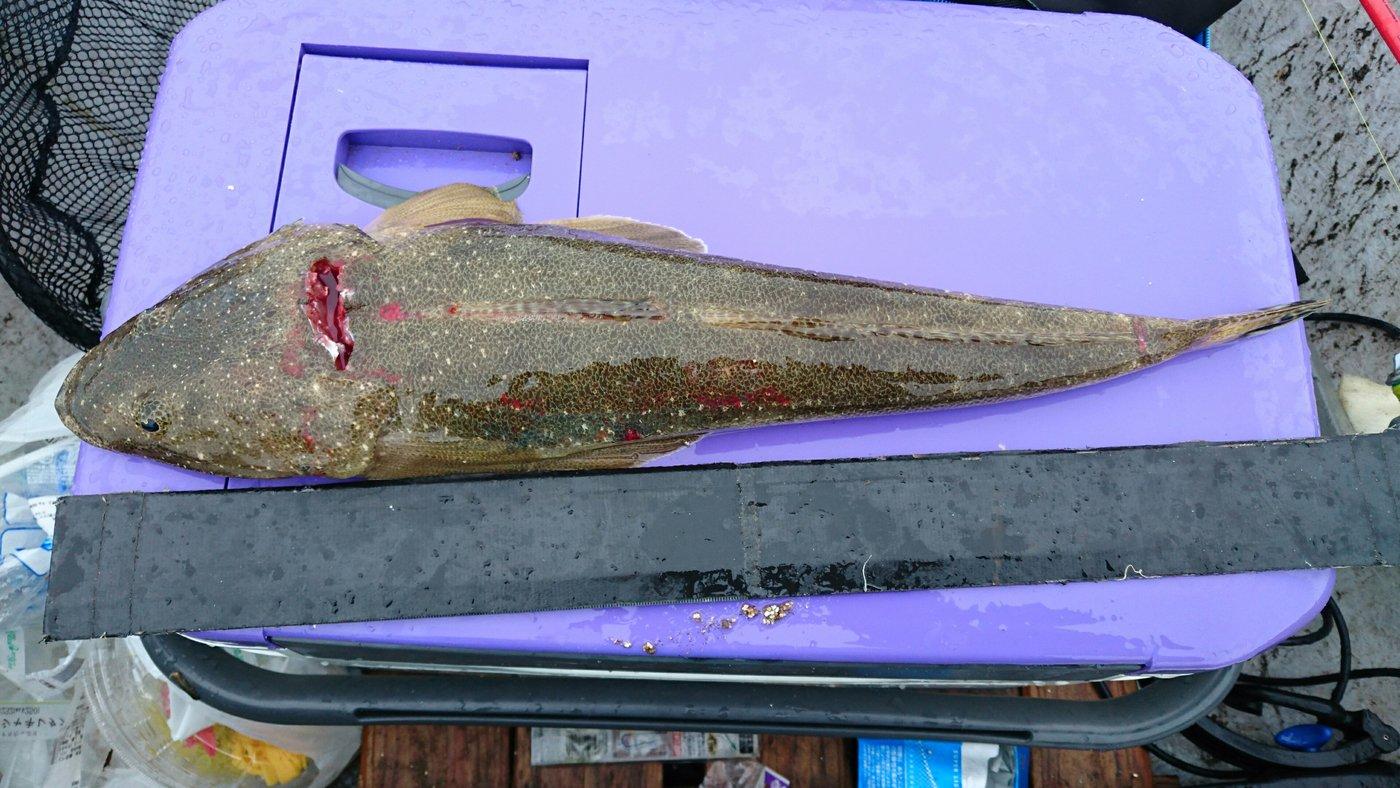 三宿のたこ焼屋さんの投稿画像,写っている魚はコチ