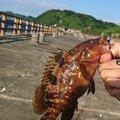 ほぬつぁんさんの新潟県三島郡での釣果写真