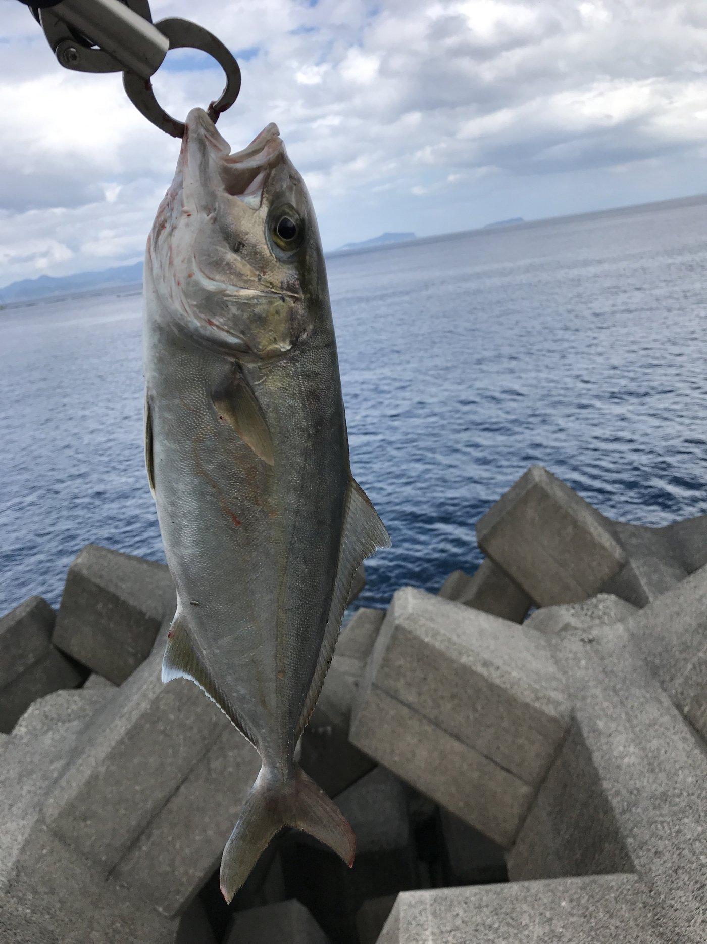 湊斗さんの投稿画像,写っている魚はカンパチ