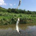 taketonbowさんの福井県三方郡での釣果写真