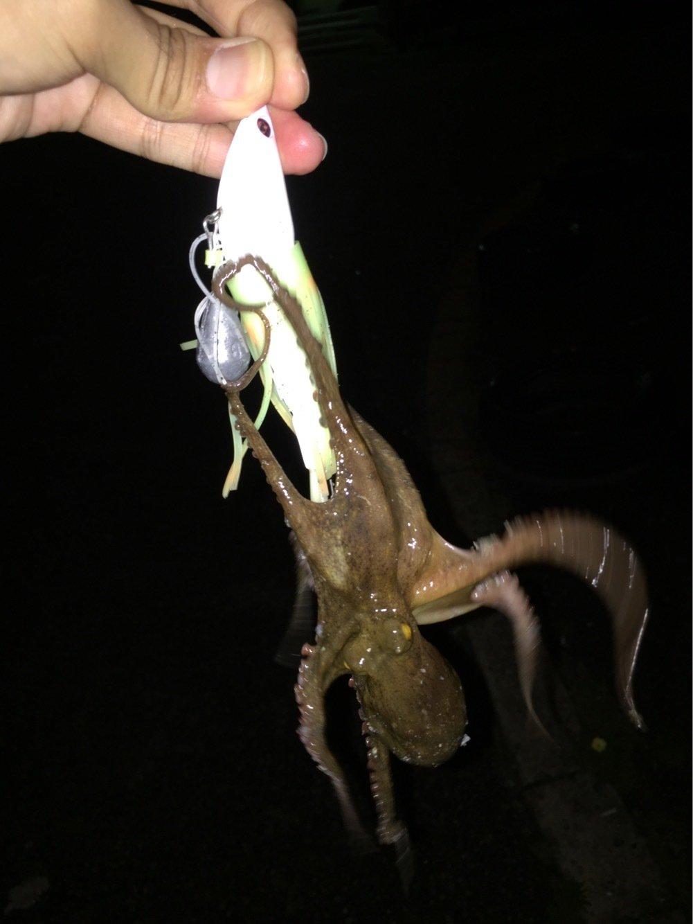 MSKさんの投稿画像,写っている魚はマダコ