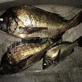 コキチさんの大阪府三島郡での釣果写真