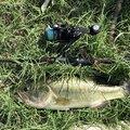 わかさんの岐阜県羽島郡での釣果写真