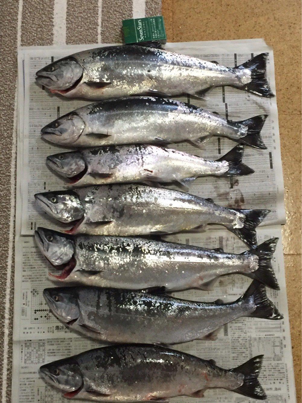 釣りバカさんの投稿画像,写っている魚はサクラマス