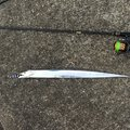 TDMAさんの宮崎県日向市でのタチウオの釣果写真