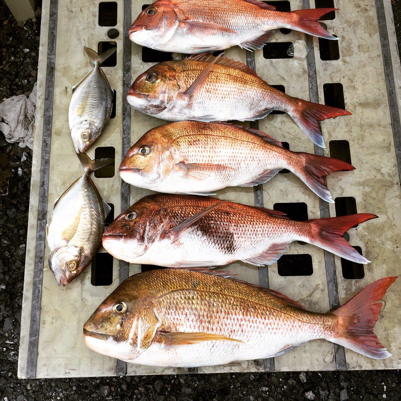 たかちさんの投稿画像,写っている魚はマダイ
