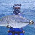 ユミさんのカスミアジの釣果写真