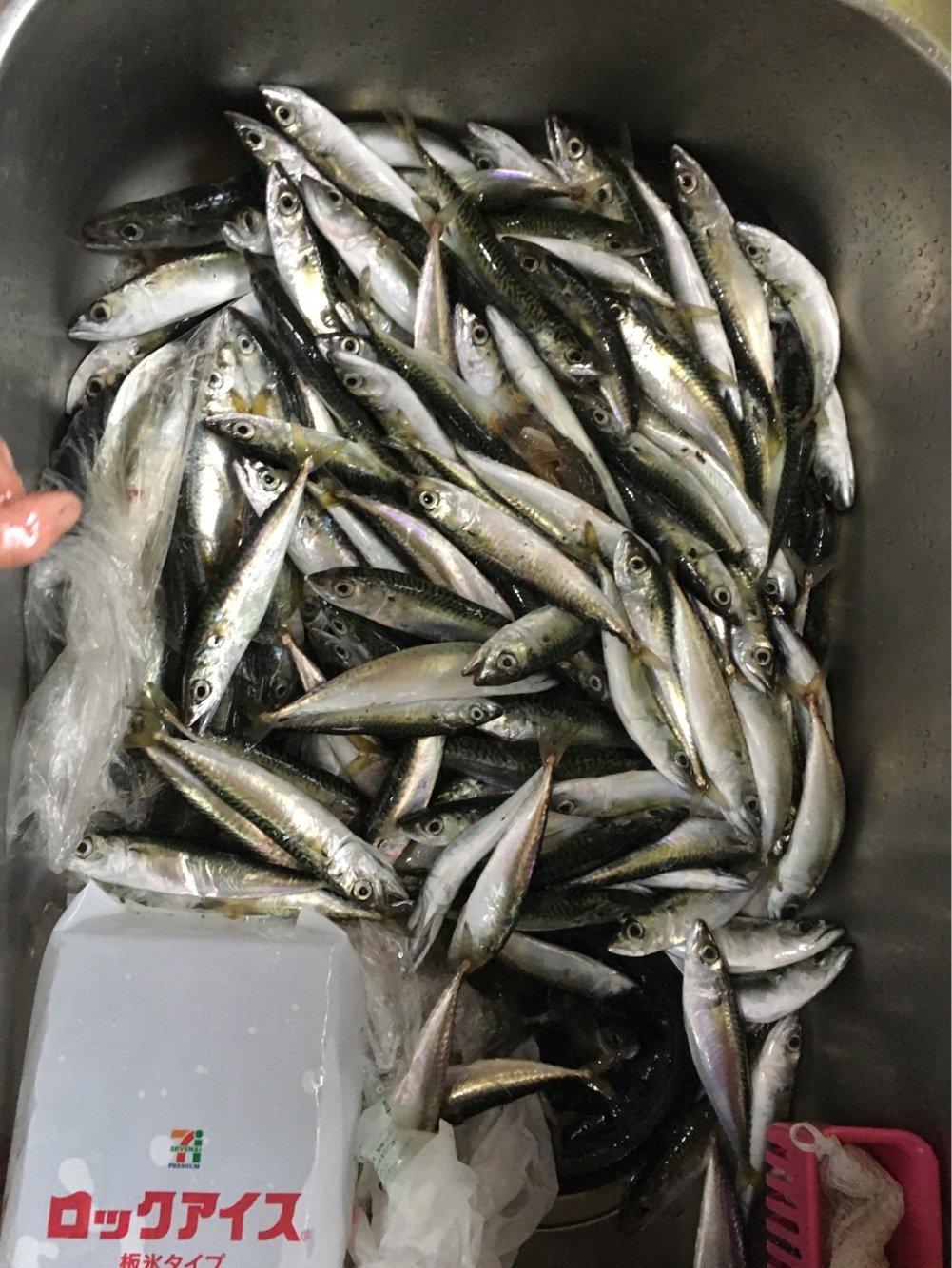 くんくんさんの投稿画像,写っている魚はゴマサバ