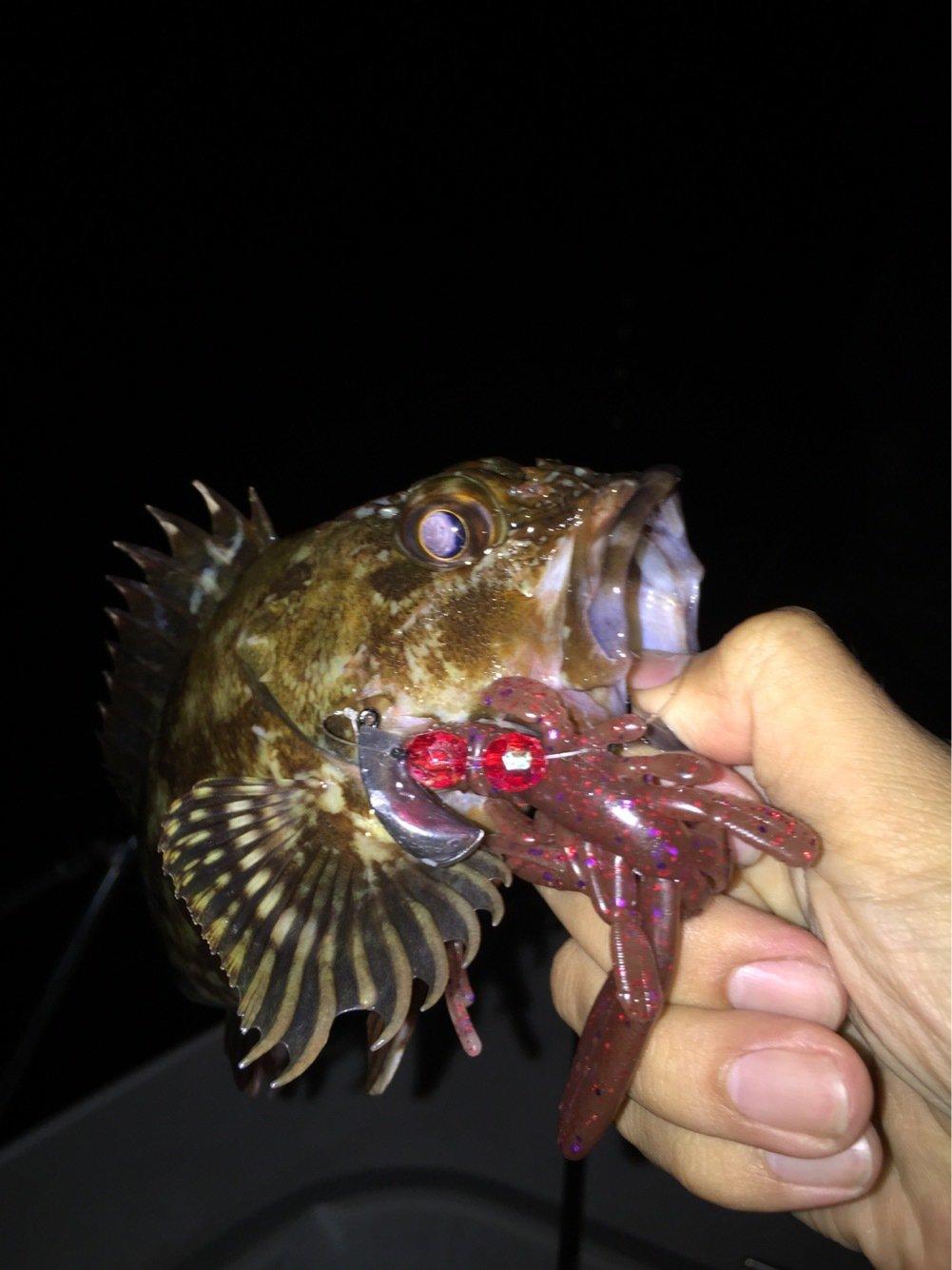 MSKさんの投稿画像,写っている魚はカサゴ
