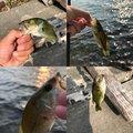 たくさんの山梨県富士吉田市での釣果写真