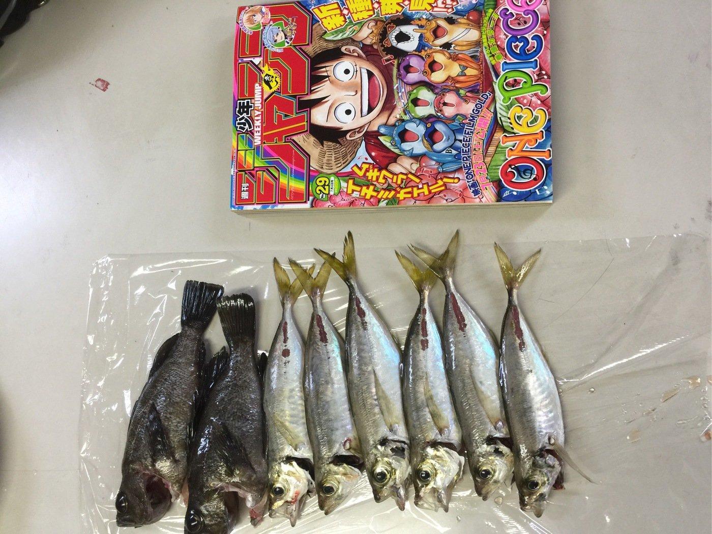 せいやさんの投稿画像,写っている魚はアジ