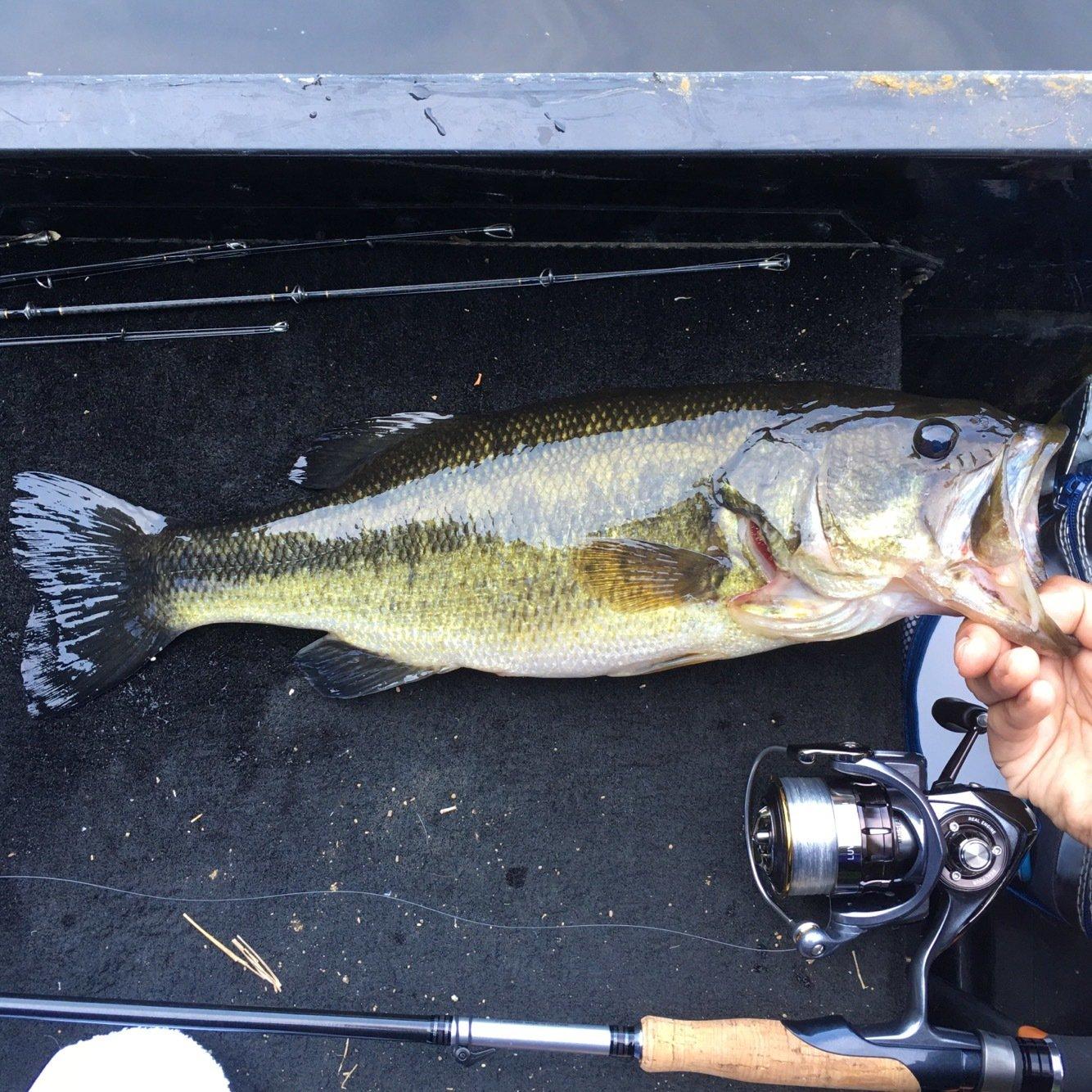 takeさんの投稿画像,写っている魚はブラックバス