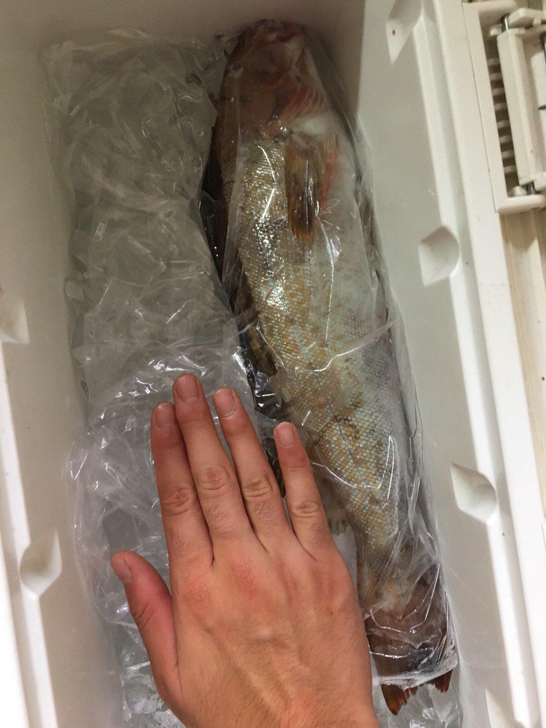 釣りキチ三平さんの投稿画像,写っている魚はアイナメ