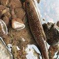 りょうさんの北海道磯谷郡での釣果写真