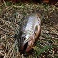 タナカ ショウタさんの北海道北見市での釣果写真